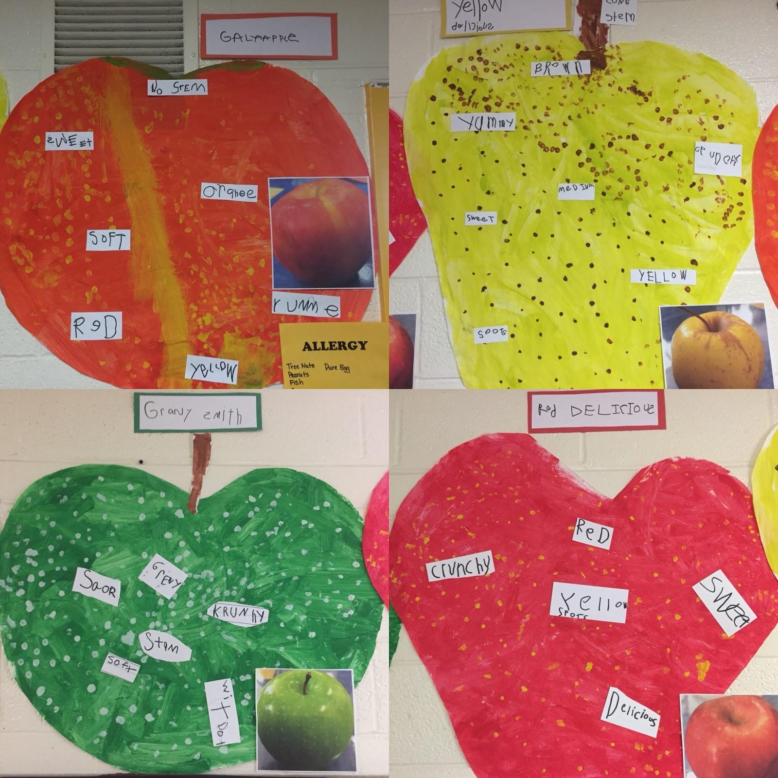 Inquiring Minds Mrs Myers Kindergarten Inquiring About Apples