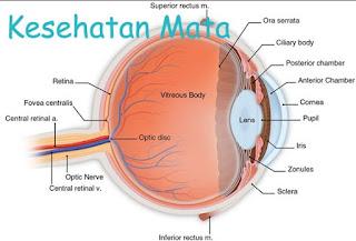 Makanan Untuk Mata Dan Cara Merawat Mata