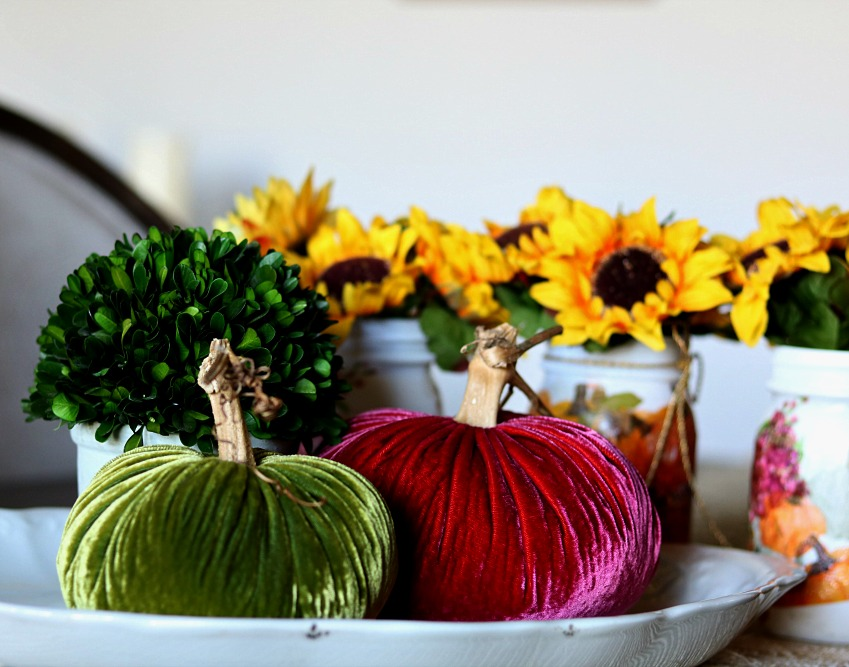 Velvet pumpkins, boxwood and sunflowers