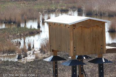 Gran casa per a ratpenats, al Delta de l'Ebre