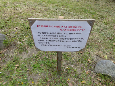 枚岡梅林のウメ輪紋ウイルス感染によるウメの木伐採について