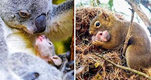 18 Adorables fotos que demuestran que no hay nada como el amor de una madre