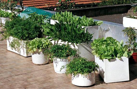 Cultivar el Huerto Casero Errores en la eleccin de las macetas