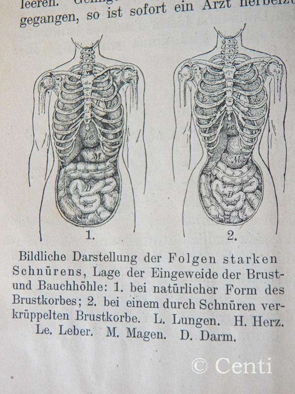 Großartig Oberflächenanatomie Herz Zeitgenössisch - Menschliche ...