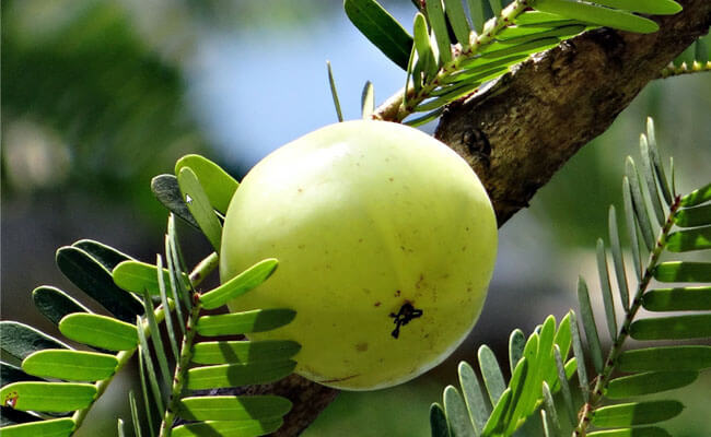 how to stop hair fall amla