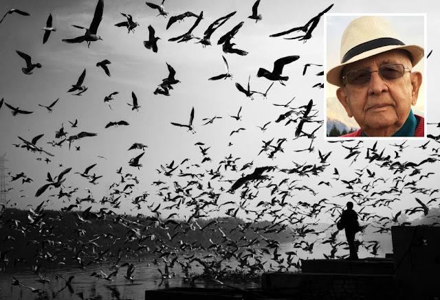 gaivotas porto portugal viagem ambiente de leitura carlos romero