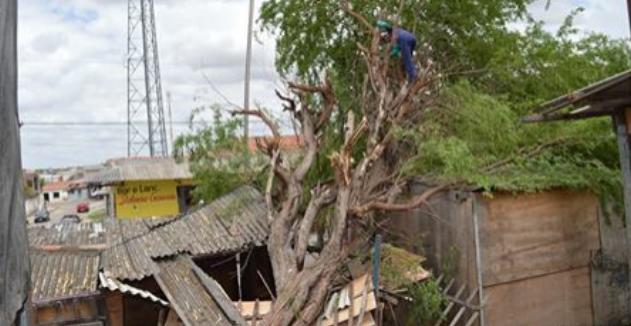 Em Delmiro Gouveia, barraco  fica totalmente destruído após árvore cair por cima