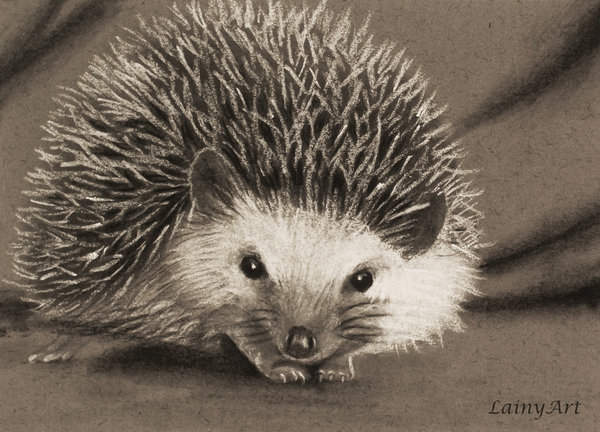 01-Baby-Hedgehog-Alaina-Ferguson-Lainy-Animal-Charcoal-Portrait-Drawings-www-designstack-co