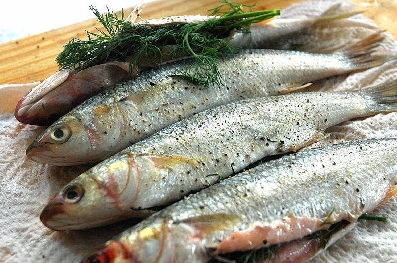 Manfaat Ikan Konsumsi