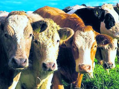 Axa Assurance agriculteurs