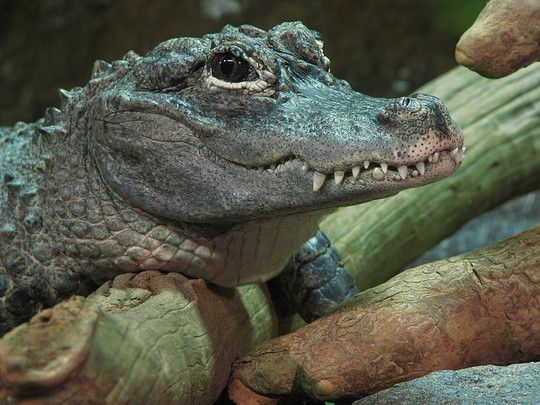 1001Archives: 18 Weird and Most Rarest Reptiles in The World  1001Archives: 1...