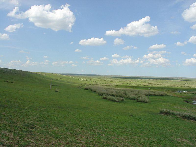 Temperate Grassland Biome