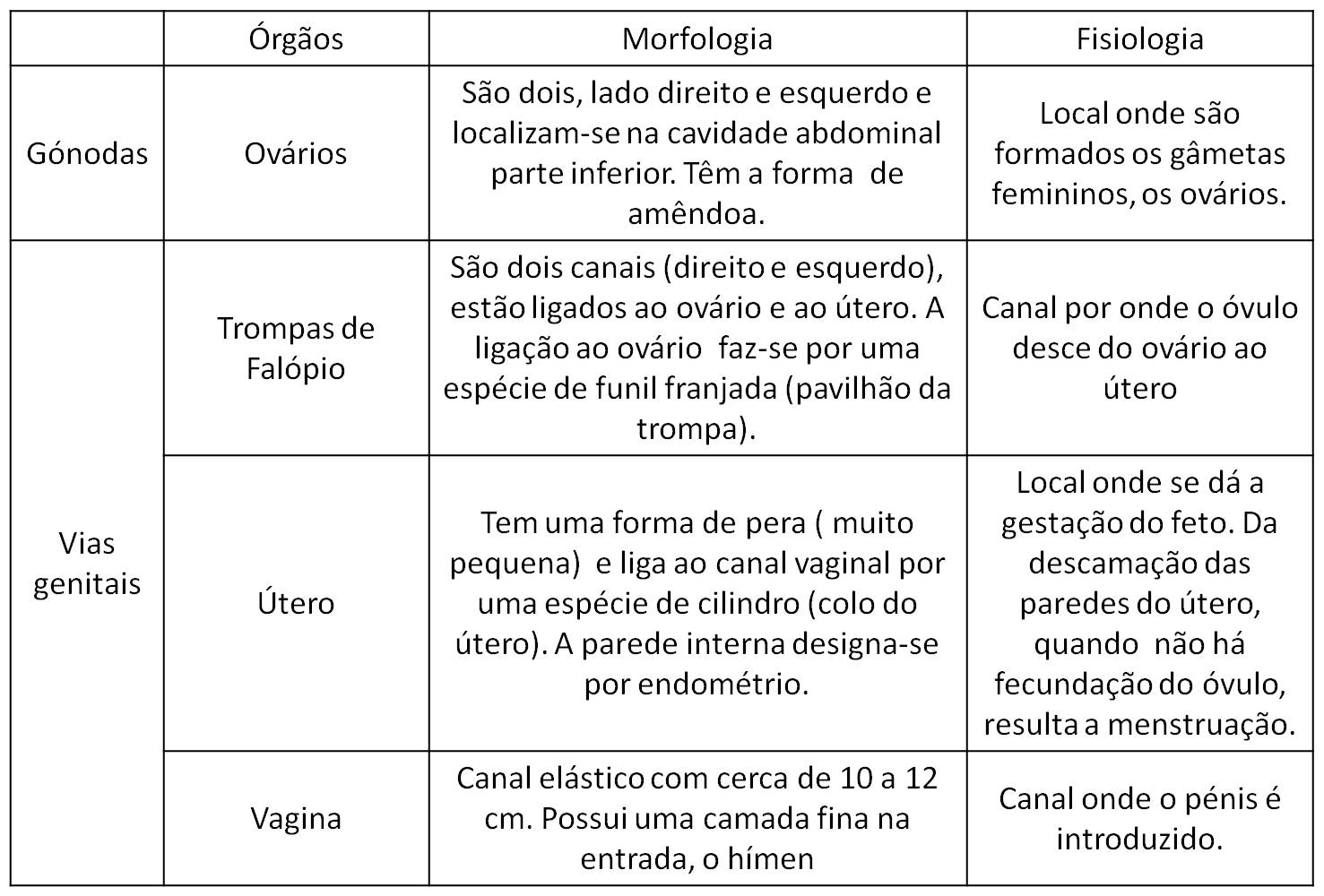 0deb013239 Portefólio de Ciências: Aparelho Reprodutor Feminino e Masculino