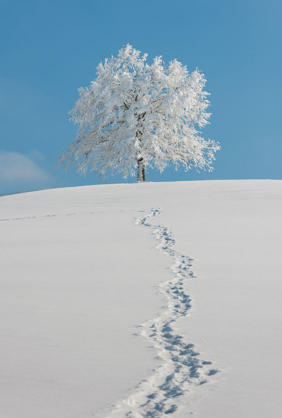 Price Limit - Snow & tree