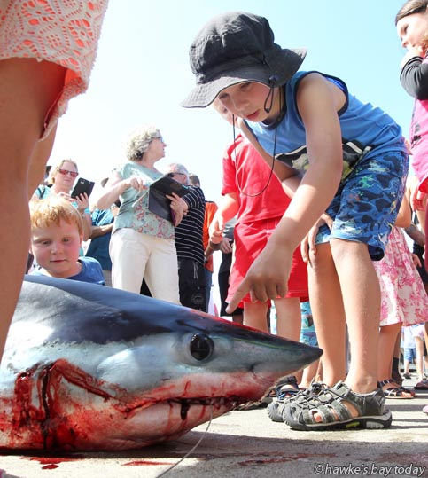 A 70kg Mako shark, caught by Luke Ross, Napier, on his father Garrie Ross's boat Bay Rum, didn't qualify but caused huge interest as it arrived just minutes before the final weigh-in on the third and last day of the Your Solutions MegaFish Hawke's Bay fishing competition at the Hawke's Bay Sports Fishing Club, Napier. photograph