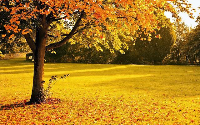 Foto met boom en bladeren in de herfst