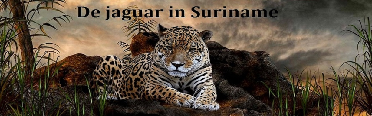 Nieuws over de jaguar in Suriname