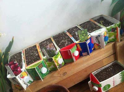 DIY Tanam Pokok Dalam Bekas Minuman