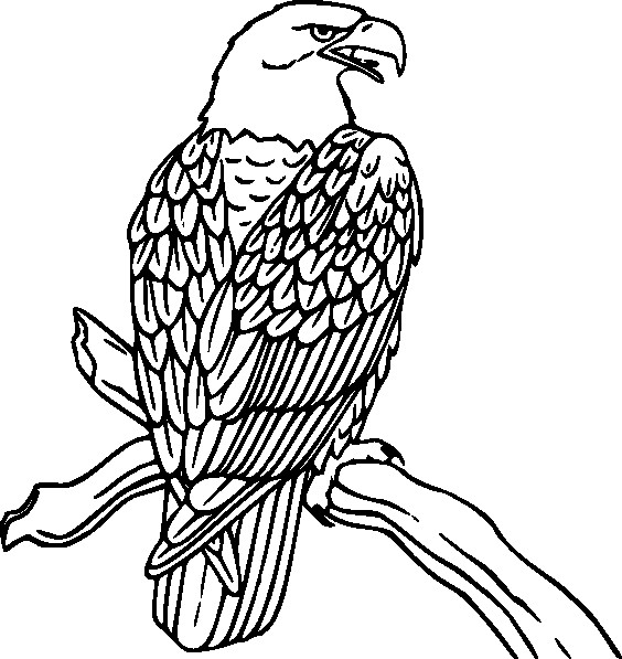 Sketsa Gambar Burung Elang Terbaru
