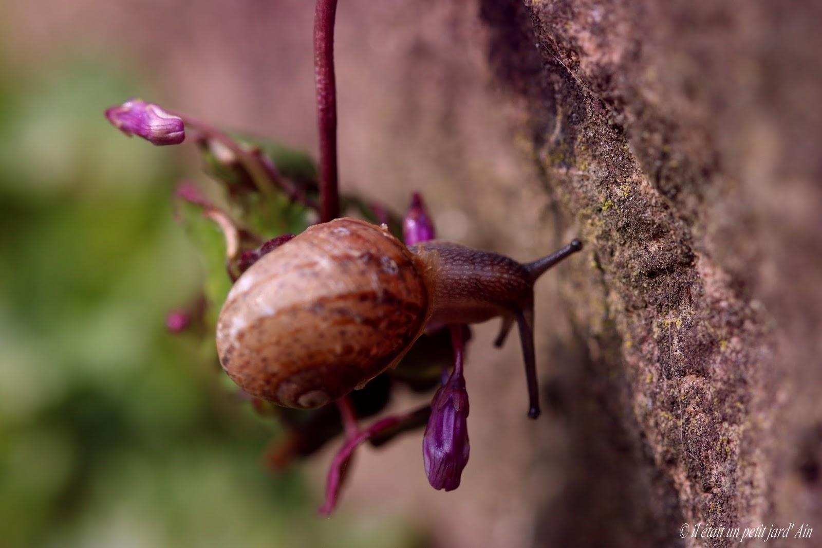 Petit escargot baveux 2 - 1 8