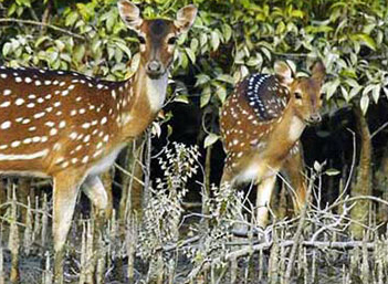 Beautiful Bangladesh: Sundarban, A Beauty of Bangladesh