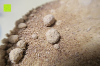 Klumpen: Wohltuer Bio Kokosblütenzucker 2kg