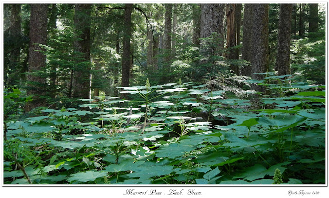 Marmot Pass: Lush. Green.