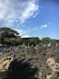 大島動物園(ワオキツネザル)