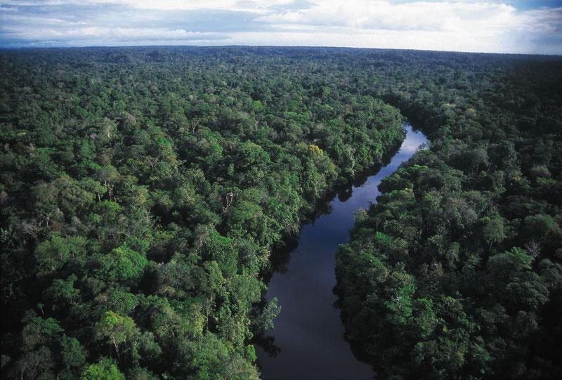 Amazonj