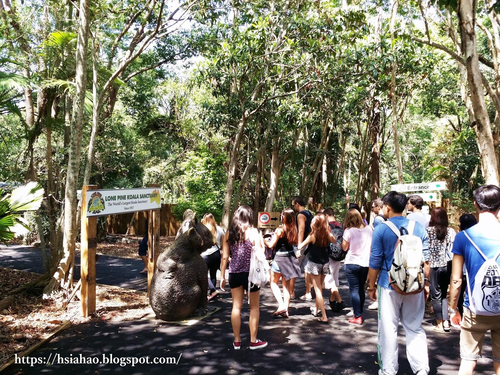 布里斯本-龍柏動物園-門票-龍柏動物園活動-無尾熊-袋鼠-行程-龍柏動物園遊記-Lone-Pine-Koala-Sanctuary-Brisbane