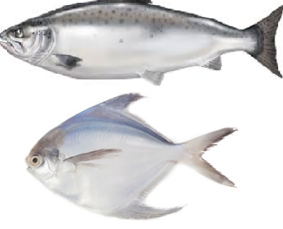 Fish meaning in tamil, telugu, marathi, kannada, malayalam, in hindi name, gujarati, in marathi, indian name, tamil, english, other names called as, translation