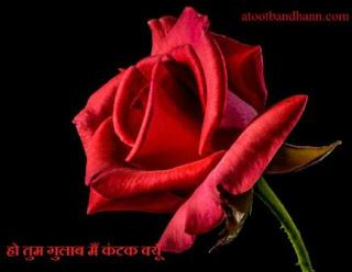 कविता -हो तुम गुलाब मैं कंटक क्यूँ