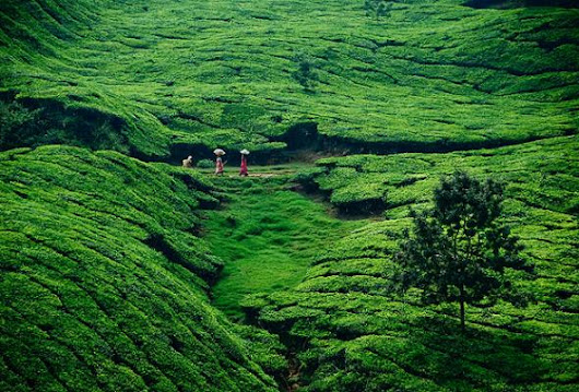 A JOURNEY THROUGH THE BEST RESORTS IN MUNNAR