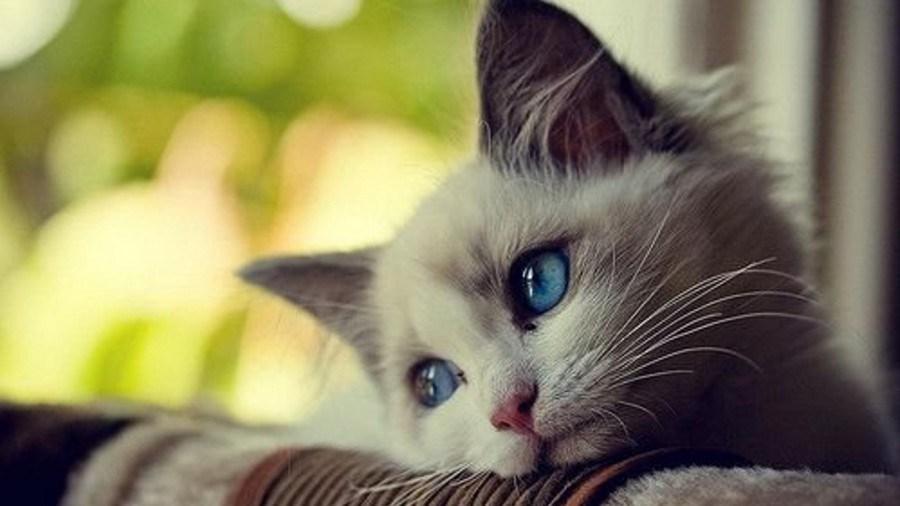 Nama Nama Kucing Lucu Perempuan