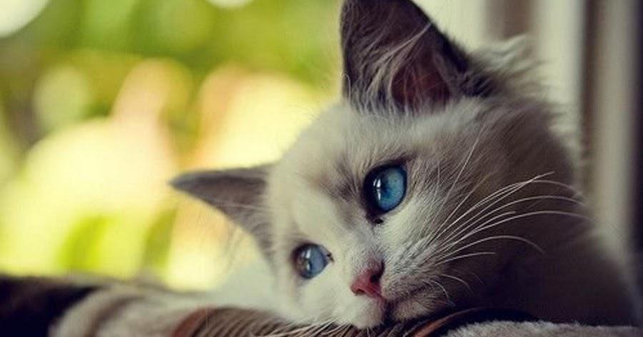 Billyevan Nama Nama Yang Bagus Untuk Kucing Laki Laki Dan Perempuan
