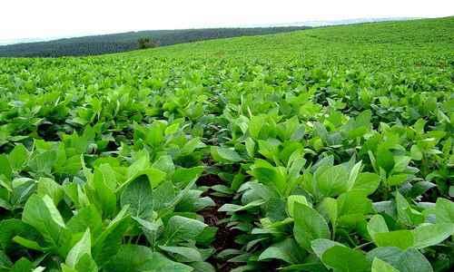 México: revocan permiso a Monsanto para siembra de OGM