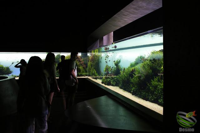 リスボン水族館