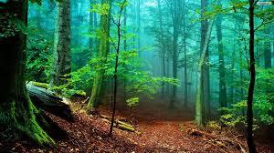 world best forest  hd wallpaper download14