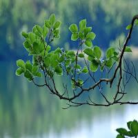 Le foglie verdi sul ramo invitano a contemplare la bellezza del creato con la preghiera