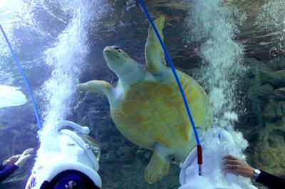 sea trek turtle sighting