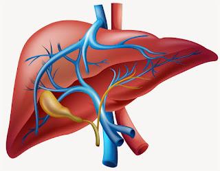 Ciri Ciri Gejala Awal Penyakit Liver | Obat Tradisional Penyakit Beri Beri