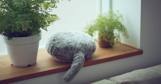 "This Cat-Inspired Robot From ""Japan"" Can Help To Cope With Anxiety"