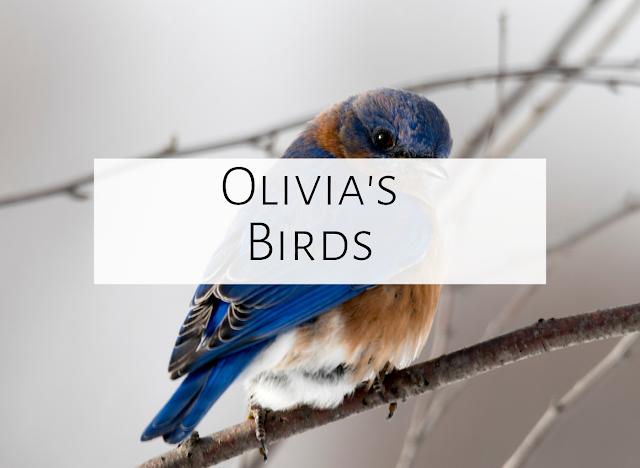 Fourth Grade Performance {Olivia's Birds}