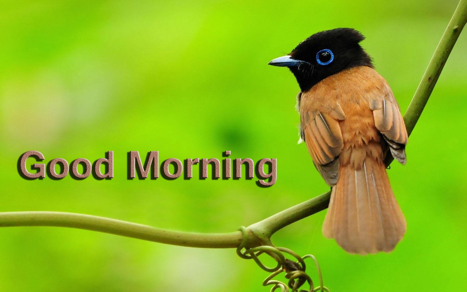 group of bird wallpaper with birds and stems
