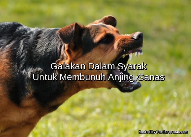 Membunuh Anjing Ganas