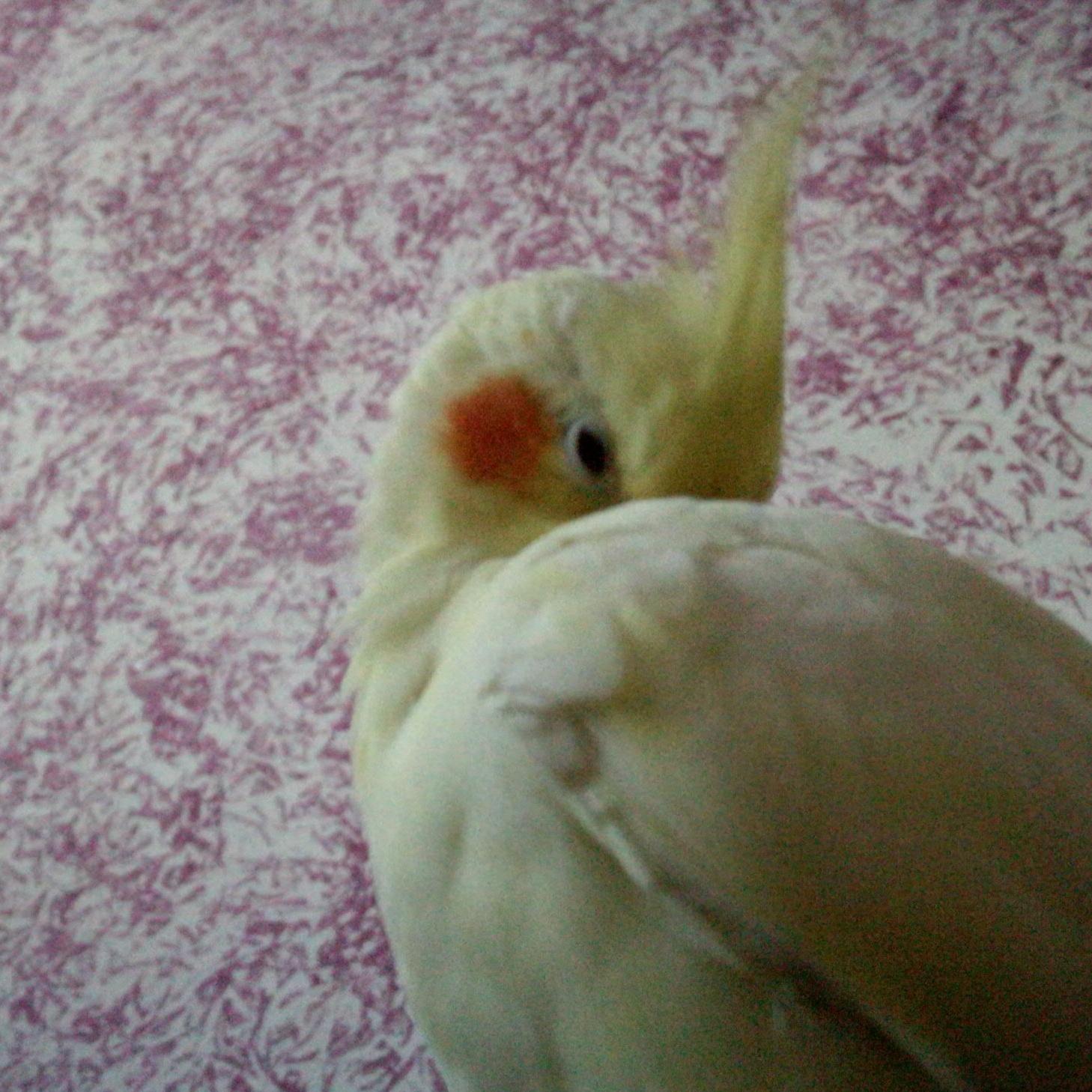 pappagallo sito di incontri