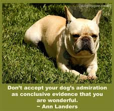 best inspirational quotes: don't accept your dog's admiration as conclusive evidence that you are wonderful.