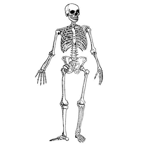 Esqueleto Humano Para Colorear Imagui