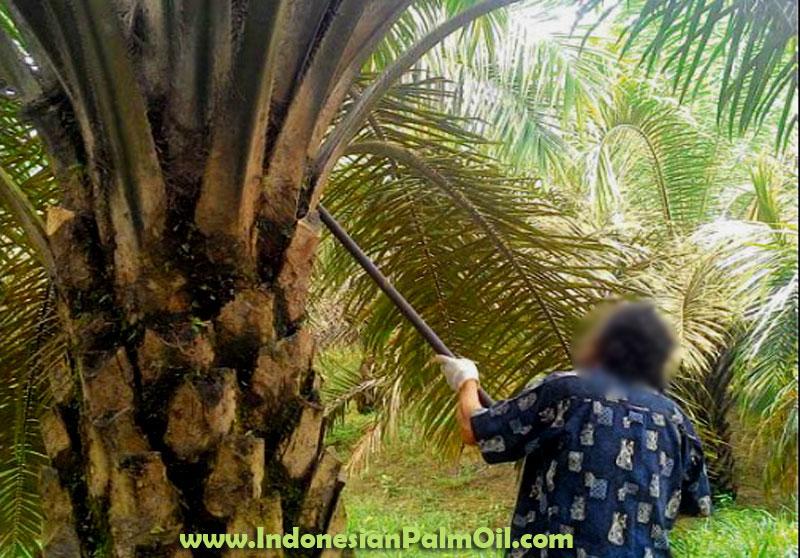 perancis kaji ulang pajak minyak tambahan sawit indonesia