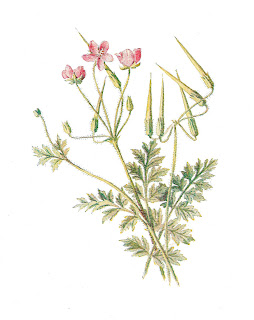 flower artwork antique wildflower illustration